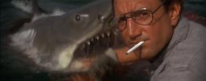 Shark's close up